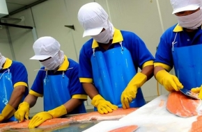 5 млн. лева инвестиция в завод за обработка на сьомга