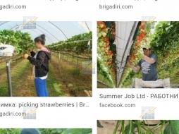 KPD.BG - Високи ягоди в оранжерии